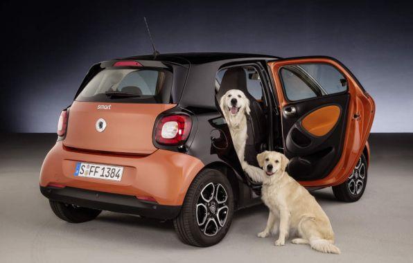 accessoire smart chien