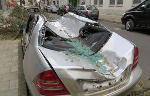 chute d'arbre sur voiture