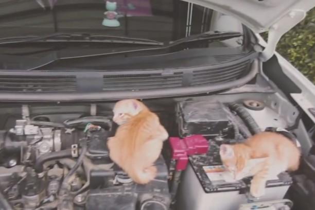 nissan sensibilise au risque de retrouver un chat dans son moteur l 39 argus. Black Bedroom Furniture Sets. Home Design Ideas