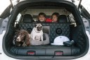nissan x-trail 4dogs concept chiens
