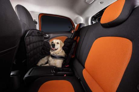 smart con oit un accessoire sp cial chien l 39 argus. Black Bedroom Furniture Sets. Home Design Ideas