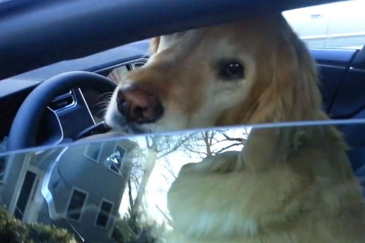 top des records automobiles les  dingues du monde le chien le  rapide pour ouvrir la