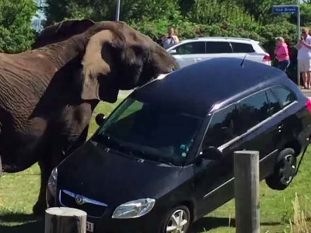 La Skoda ne fait pas le poids face à un éléphant