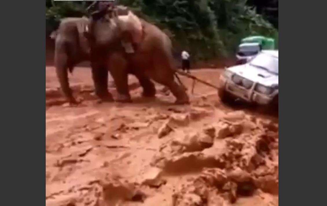 Vidéo : l'éléphant, le Saint-Bernard du 4x4